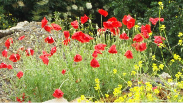 Battlefield Poppies in Belgium, The death of 2G