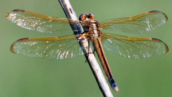 DRagonfly : Image Credit: Freeimages.com/Cheryl Empey