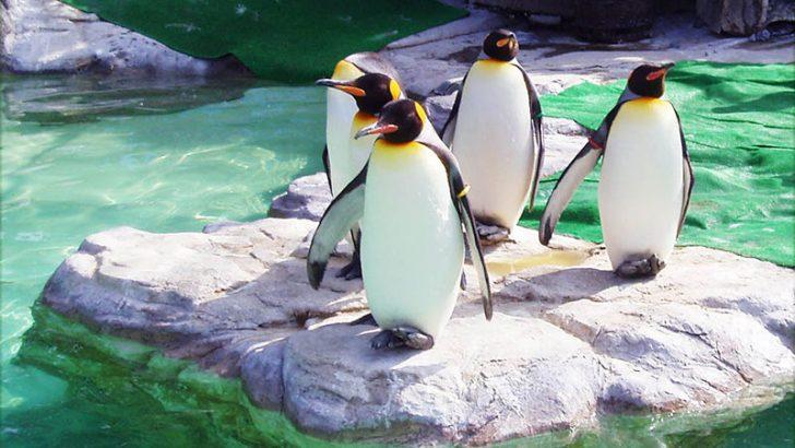 IBM announces new LinuxONE models