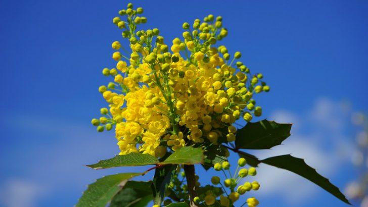 Ordinary Mahogany flowers in full bloom, Netsuite lets Teak & Mahogany bloom
