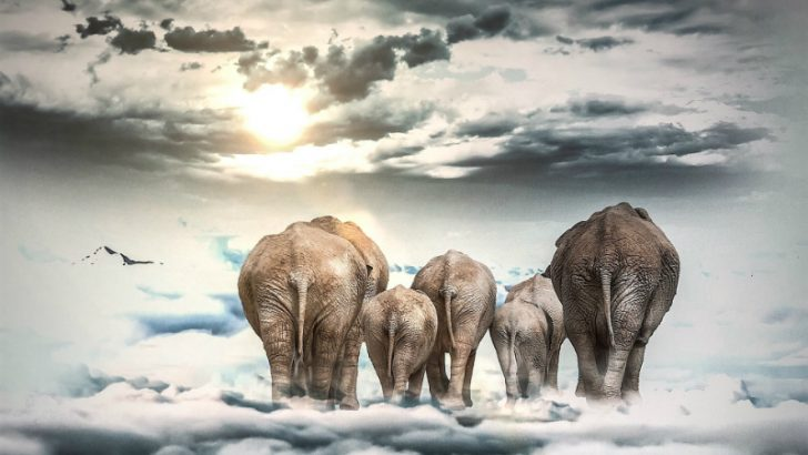 Six elephants move to cloud Image Source: Pixabay/Mysticsartdesign