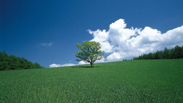 Greentree - no longer alone (Image Credit Freeimages/Cedric Tsiga